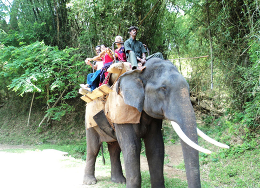 elephant safari